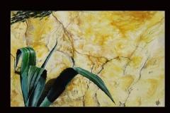 agave-au-printemps